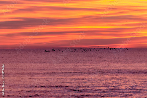Foto op Plexiglas Crimson Winter sunset landscape with flok