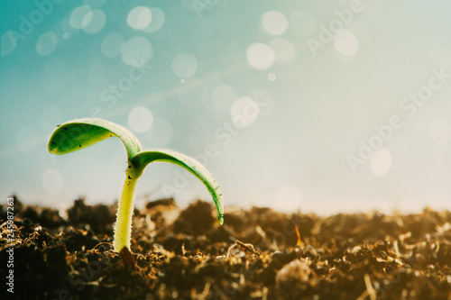 Green seedling growing on the ground