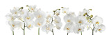 Fototapeta Storczyk - Set of beautiful orchid phalaenopsis flowers on white background