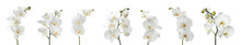 Set Of Beautiful Orchid Phalaenopsis Flowers On White Background