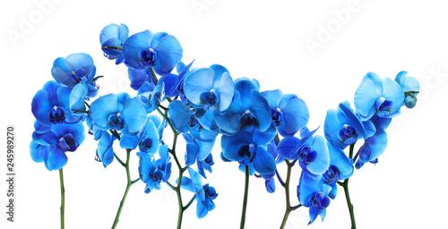 Set of beautiful blue orchid phalaenopsis flowers on white background