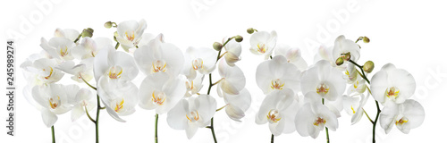 Foto  Set of beautiful orchid phalaenopsis flowers on white background