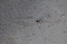 Traces Of Hunting Birds On A C...