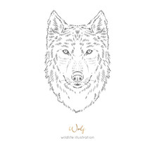 Vector Symmetrical Portrait Illustration Of Wolf Forest Animal Hand Drawn Ink Realistic Animal Sketching Isolated On White. Perfect For Logo Branding Colourig Book Design.
