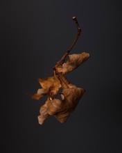 Closeup Of Dry Leaf On Dark Ba...