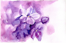 Watercolor Illustration With P...