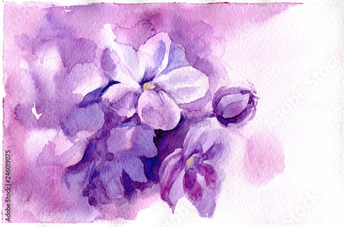 Watercolor Illustration With Purple Flowers Hand Drawn