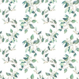 Watercolor eucalyptus branches seamless pattern. Hand painted floral repeating texture on white background. - 246037645