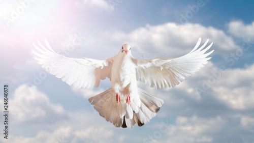 Valokuvatapetti white dove symbol of freedom in the blue sky