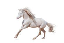 Beautiful Welsh Pony Isolated