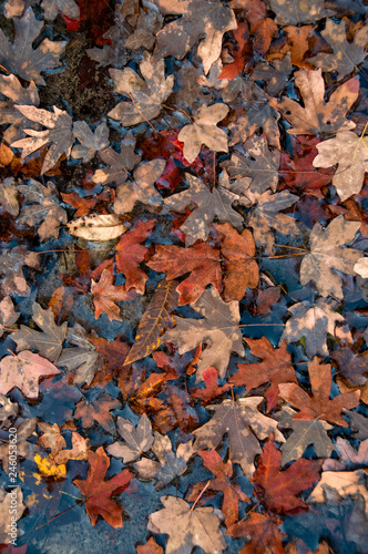 Valokuva  Leaves in Hale Hollow Creek
