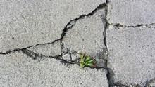 Weed Growing Through Cracked C...