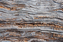 Texture Of Rotten Wood