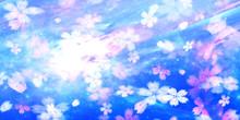 桜舞う水面