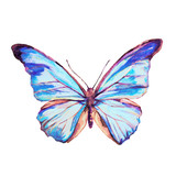 Fototapeta Motyle - beautiful butterfly,watercolor, isolated on a white