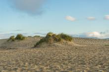 Beautiful Green Grasses And Sand Dune At Ocean Beach In San Francisco,CA