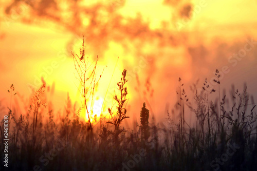 Fototapeta The bright morning sun shines through the branches of trees and plants. obraz na płótnie