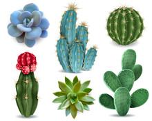 Cactus Succulent Realistic Set