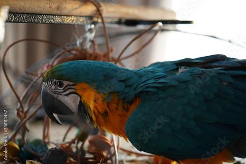 Foto auf Gartenposter Papageien Papegaai Blauw geel ara