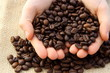 many coffee beans in the hand