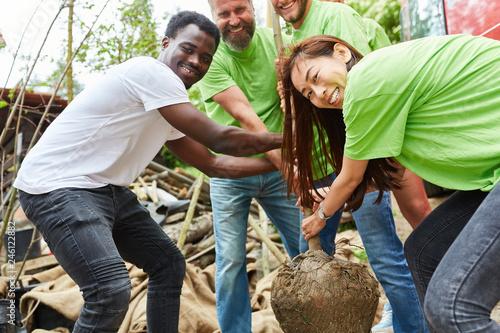 Fotografía  Junges Team Freiwilliger pflanzt einen Baum