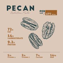 Nutririon Fact Of Pecan Sketch...