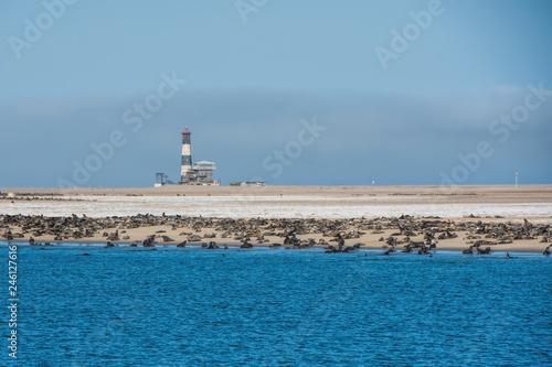 Naklejka premium kolonia lwów morskich i latarnia morska w Namibii
