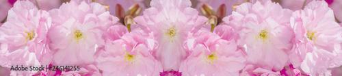 Montage in der Fensternische Hortensie border springtime background with pink blossom