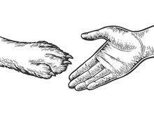 Human Hand And Dog Paw Handshake Engraving Vector Illustration. Scratch Board Style Imitation. Black And White Hand Drawn Image.