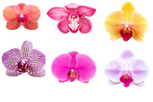 Blurred For Background.Beautiful Orchid Flower On White Background. Photo With Clipping Path.