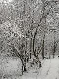 Śnieżne pejzaże