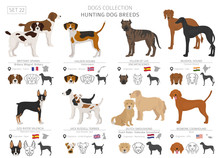 Hunting Dogs Collection Isolat...