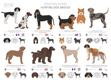 Hunting Dogs Collection Isolated On White. Flat Style. Different Color And Country Of Origin