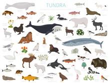 Tundra Biome. Terrestrial Ecosystem World Map. Arctic Animals, Birds, Fish And Plants Infographic Design