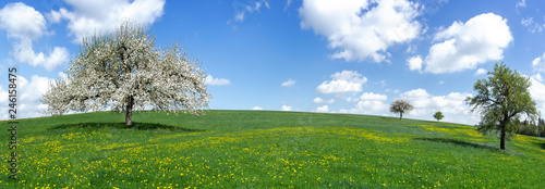 Panorama - Blühender Apfelbaum auf einer großen hügeligen Wiese mit gelbem Löwen Canvas Print