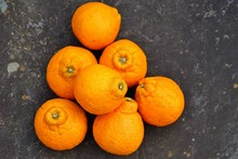 Sumo Citrus Giant Mandarin Orange Fruit
