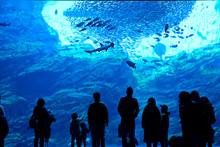 水族館の大水槽と観覧者のシルエット