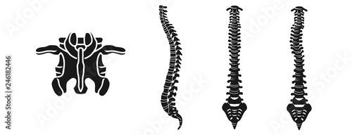 Fotografía  Spine icons set