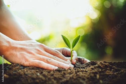 Fototapeta Fresh Green Plant Growing,Tree Growth Steps In nature And beautiful morning lighting obraz na płótnie