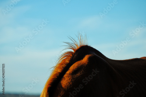 Leinwand Poster  Horse mane sticking up off withers with blue rural sky in background