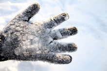 The Palm With The Glove In The Snow.