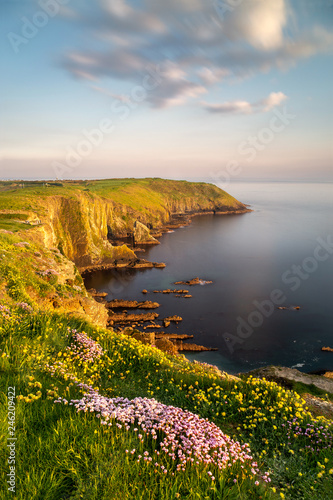Beautiful nature scene with blooming flowers at sunset Fototapet