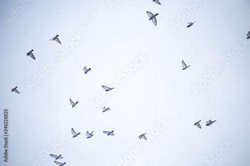 Valokuva  Gołębie