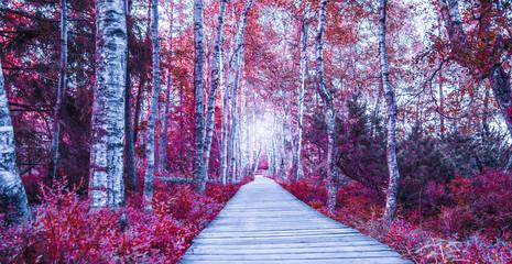 Panel Szklany Podświetlane Brzoza Birkenwald im Schwarzwald rot/pink