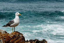 Seagull Standing On The Rock Next To The Wavy Ocean