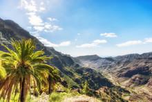 Palme An Einem Steilen Berghang Im Barranco De Mogan Auf Gran Canaria