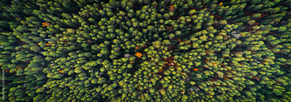 Fototapety, obrazy: Aerial top view of autumn trees in wild park in september