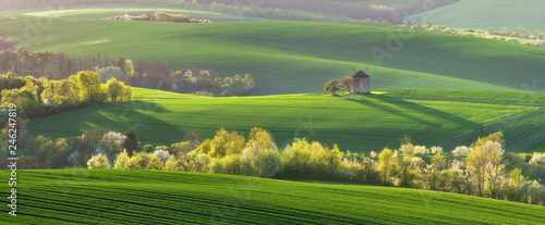 Old windmill on a hill in the rays of the sun at sunset, green fields, blooming trees. Spring rural landscape with an old mill and blooming trees. South Moravia. Czech Republic.