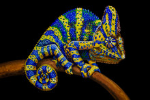 Oil Painting - Chameleon On A ...