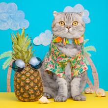 A Cat On Holiday In A Hawaiian...